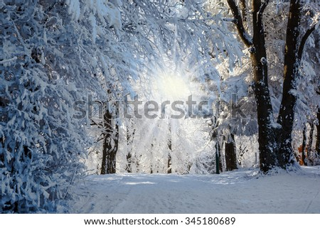 Forest glade, covered with snow, sunny Christmas morning - stock photo