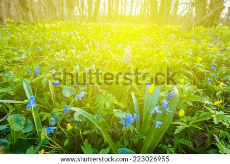 forest glade in a rays of sun - stock photo