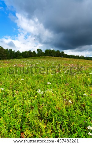 Forest glade under blue sky and clouds. Green meadow with flowers and grass. The trees in the background. - stock photo