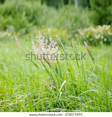 Forest, green grass in the wind - stock photo