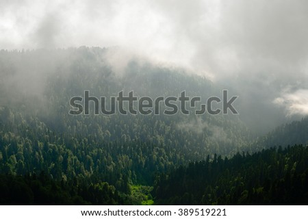 Forest. Green mountain forest landscape. Misty mountain forest. Fantastic forest landscape. Mountain forest in clouds landscape. Foggy forest. Mountain forest landscape. Dark forest in haze landscape. - stock photo