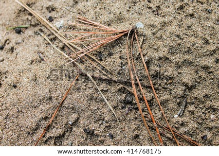 Forest Ground - stock photo