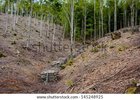 Forest harvesting and clear cutting operation in Corno alle Scale park.  - stock photo