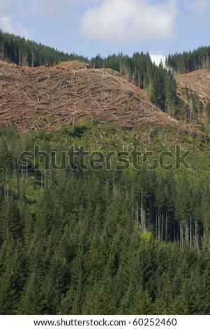 Forest harvesting and clearcutting operation. - stock photo