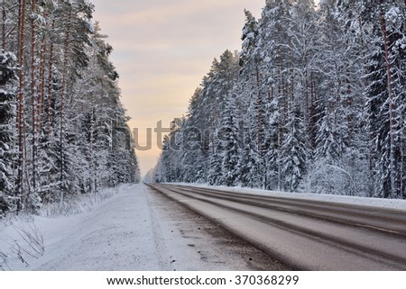 Forest highway through an old coniferous forest at winter