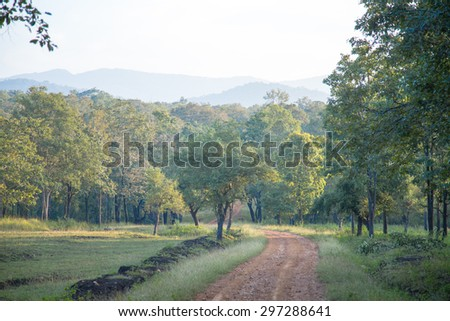 Forest, hills and road - stock photo