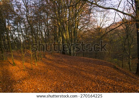 forest in autumn atmosphere full of leaves and the mysterious recesses