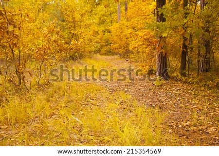 Forest in Autumn. Forest in September.Landscape: trees, leaves, leaf, ground - stock photo