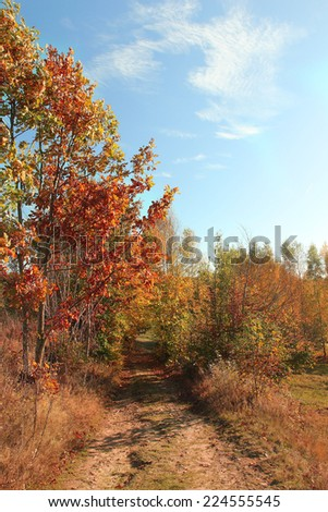 forest in autumn time - stock photo