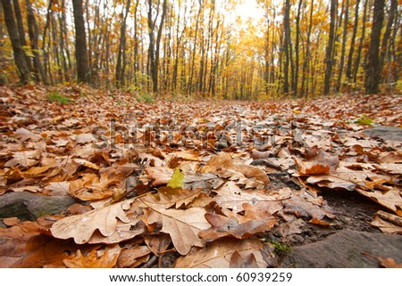 forest in autumn with leaves fallen on the ground - stock photo