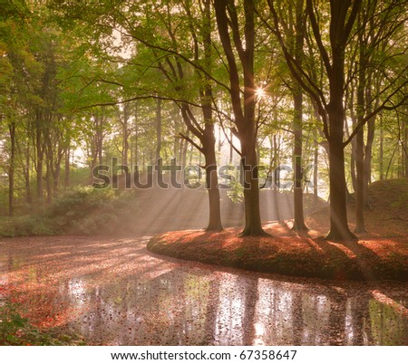 Forest in autumn with pond and mist with sunrays - stock photo