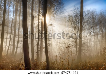 forest in autumn with sunbeams