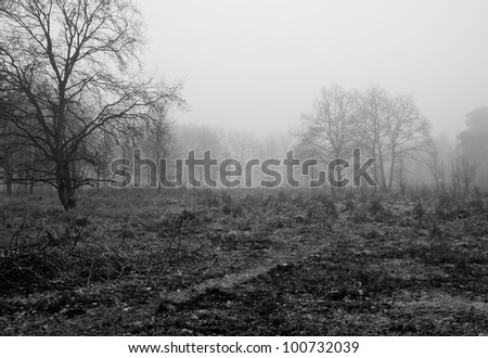 Forest in black and white - stock photo