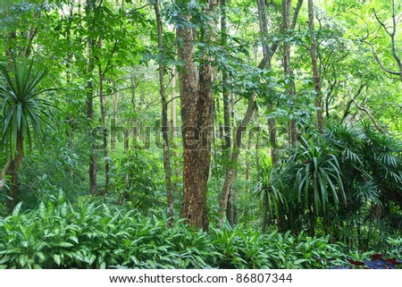 forest in Chiang Mai ,Thailand - stock photo