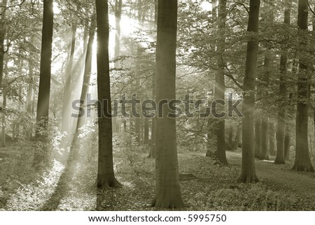 Forest in early morning. - stock photo
