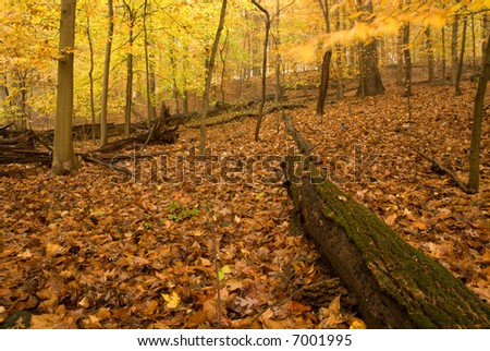 Forest in Fall. - stock photo