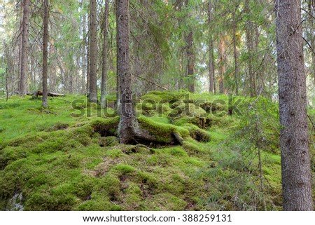 Forest in Finland at summer - stock photo