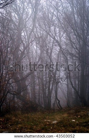 forest in fog. autumn in mountains.
