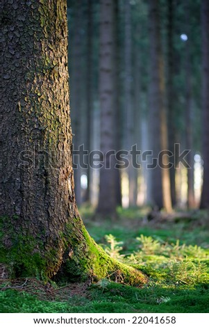 Forest in late afternoon - stock photo