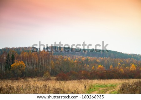 Forest in late autumn - stock photo