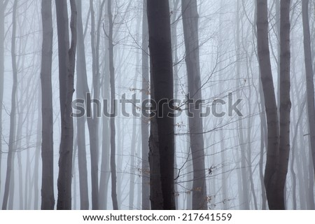 Forest in mist - stock photo
