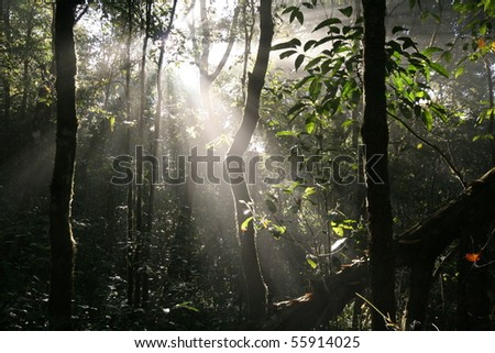 Forest in morning - stock photo