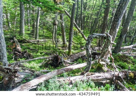 Forest in National Park Tierra del Fuego, Argentina - stock photo
