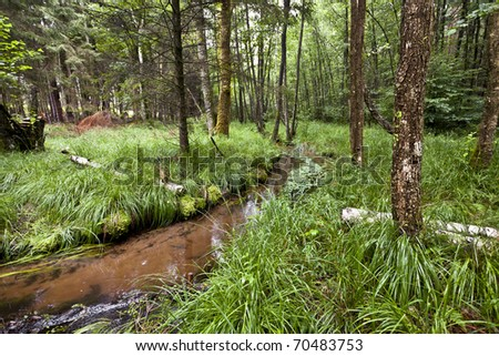 forest in northern france with a small river - stock photo