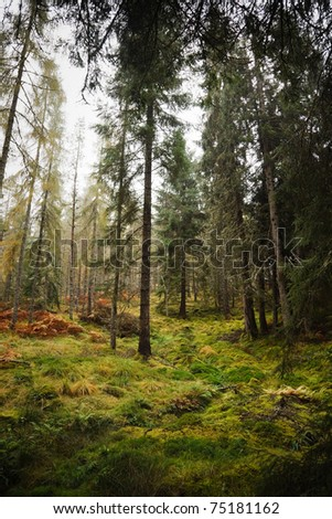 Forest in Scotland - stock photo