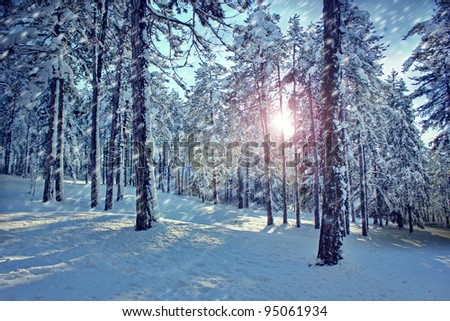forest in snow - stock photo
