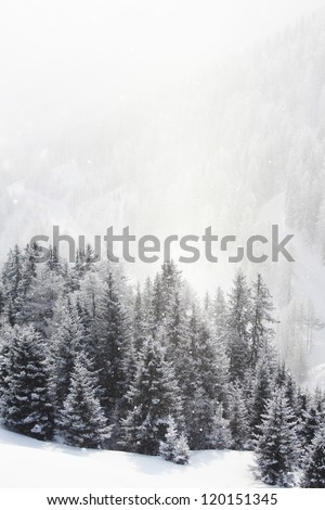 forest in snow on alpen top - stock photo