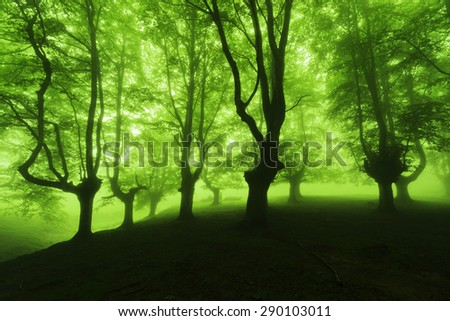forest in spring with foggy sunlight