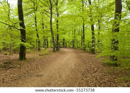 Forest in springtime - stock photo