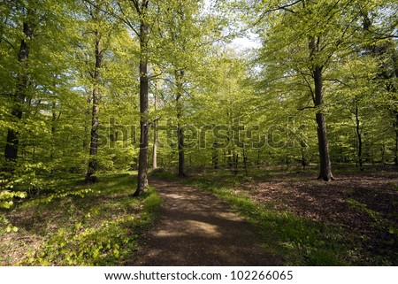 Forest in springtime with footpath
