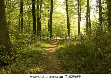 Forest in springtime with footpath - stock photo