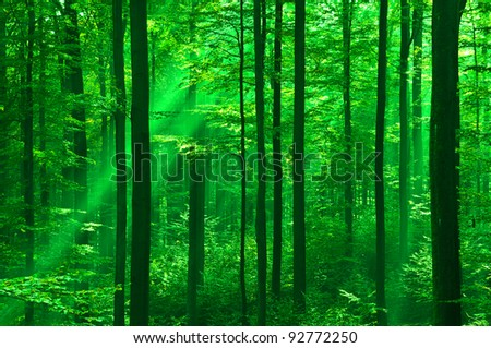 Forest in springtime with sunbeams - stock photo
