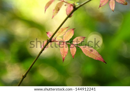 Forest in thailand - stock photo