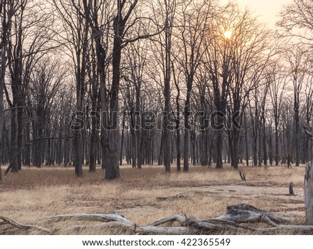 forest in the African savanna  - stock photo