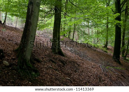 Forest in the Ardennes, Belgium - stock photo