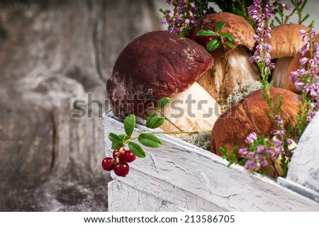 Forest in the basket - stock photo