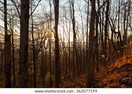 Forest in the Blue Ridge mountains, Georgia - stock photo