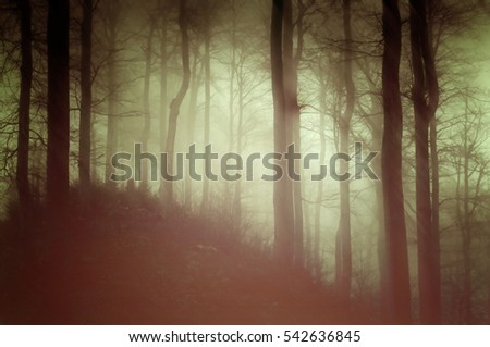 Forest in the mist. Black slope in the woods. Green filter