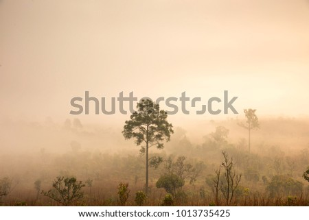 Forest in the morning.