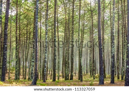 forest in the morning - stock photo
