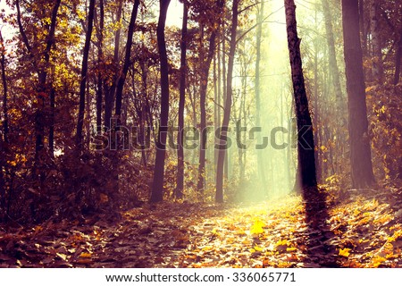 Forest in the Morning at Misty Weather - stock photo