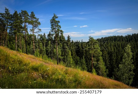 forest in the mountains - stock photo