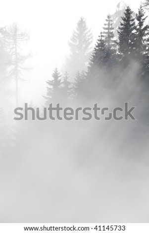 Forest in the mountains in the clouds with fog - stock photo