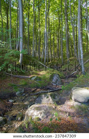 forest in the national park jasmund on ruegen in germany