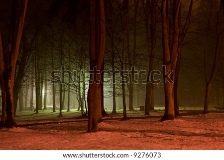 Forest in the night. Colorful lights. Night shot. - stock photo