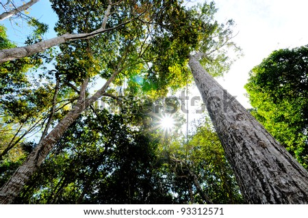 Forest in the north - stock photo